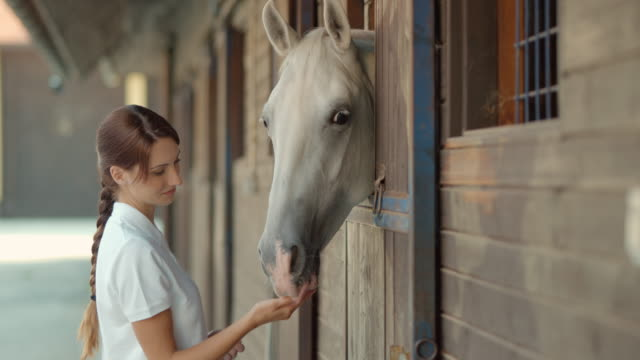 SLO MO DS Caretaker caressing horse looking out of stable
