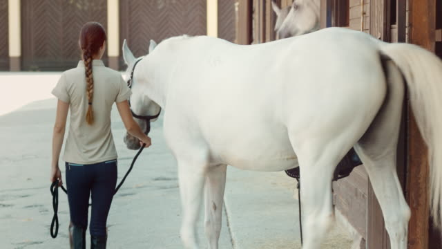 DS Caretaker leading a white horse out of the stable