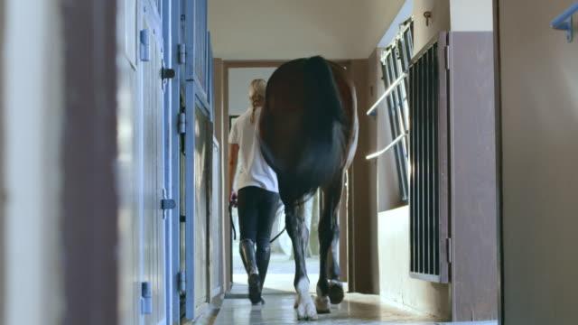 stockvideo's en b-roll-footage met ds caretaker leidt baai paard uit de stabiele doos - alleen één mid volwassen vrouw