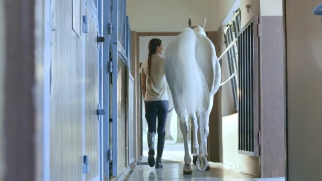 vídeos de stock, filmes e b-roll de ds zelador leading cavalo branco do estável caixa - montar um animal