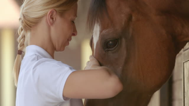 slo mo caretaker petting the bay horse - women doing farm animals stock videos and b-roll footage