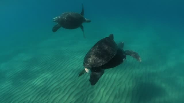 caretta caretta turtles mate in a sea of micro plastics off the coast of alagadi in the self proclaimed turkish republic of northern cyprus - sea turtle stock videos & royalty-free footage