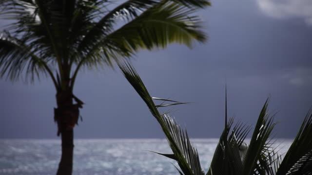 vídeos de stock e filmes b-roll de caribbean coastline - palm trees swaying - riviera maia