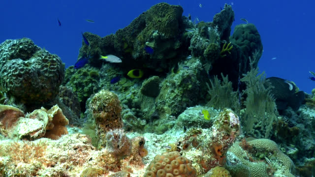 Caribbean coral formation with Blue