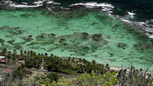 vidéos et rushes de caribbean flora - guadeloupe
