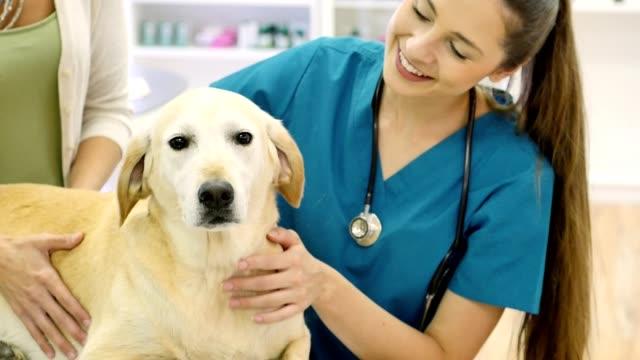 Fürsorglichen weiblichen Tierarzt untersucht Reifen Hund