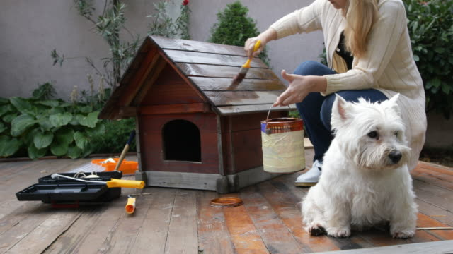 vídeos de stock, filmes e b-roll de cuidar de animais de estimação - pet equipment