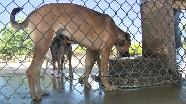stockvideo's en b-roll-footage met kswb carlsbad ca us dogs drinking water and running in dog park on wednesday may 20 2020 - carlsbad californië