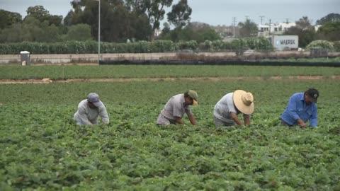 carlsbad strawberry fields - carlsbad california stock videos & royalty-free footage