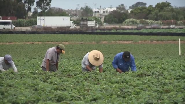 carlsbad strawberry fields - carlsbad california stock videos & royalty-free footage