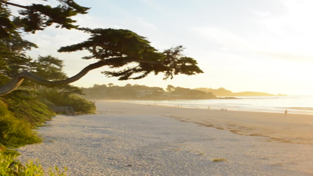 carmel california cypress tree and waves at sunset on ocean at beach below city near pebble beach - carmel california stock videos and b-roll footage