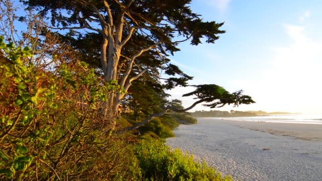 carmel california old tree and steps to beach abstract in exclusive city sunset color - exklusiv stock-videos und b-roll-filmmaterial