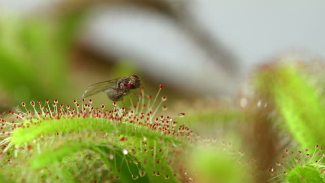 carnivorous plant - carnivorous plant stock videos and b-roll footage