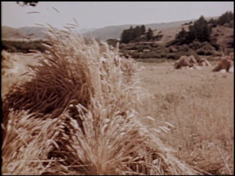 a carol of harvest - 7 of 10 - see other clips from this shoot 2070 stock videos & royalty-free footage
