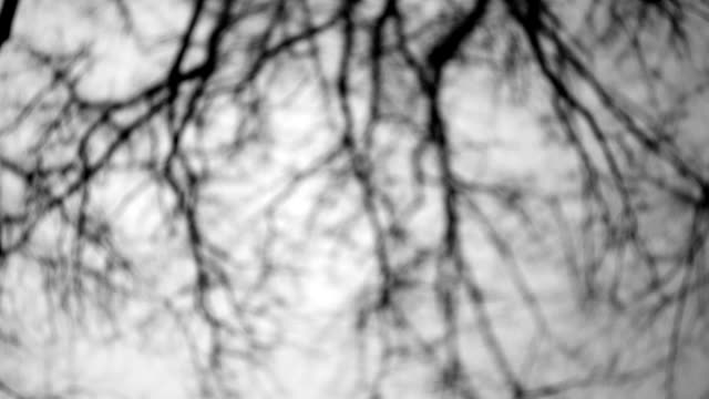 vidéos et rushes de carrousel sur l'aire de jeux, vue des arbres - vertige