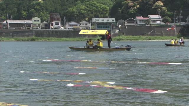 vídeos de stock, filmes e b-roll de carp streamers swimming in river - representação de animal