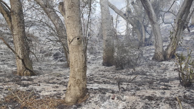 carpinteria, california usa: during the thomas fire firefighters from the salinas california fire department mop up hot spots after a fire on a steep... - steep hill stock videos & royalty-free footage