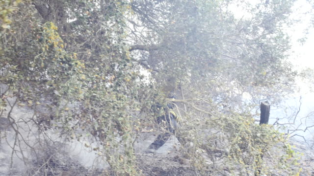 During the Thomas Fire firefighters from the Salinas California fire department mop up hot spots after a fire on a steep hill next to an avocado farm...