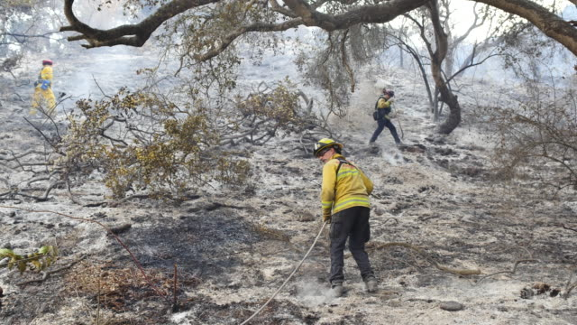 vídeos de stock, filmes e b-roll de during the thomas fire firefighters from the salinas california fire department mop up hot spots after a fire on a steep hill next to an avocado farm... - santa barbara