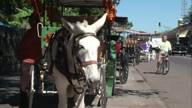 a carriage driver awaits customers in new orleans. - maultier stock-videos und b-roll-filmmaterial