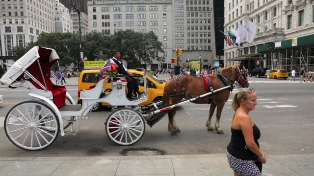 vidéos et rushes de a carriage horse and driver pause by central park moments before all drivers were ordered to return to the stables due to heat on august 10 2018 in... - voiture attelée