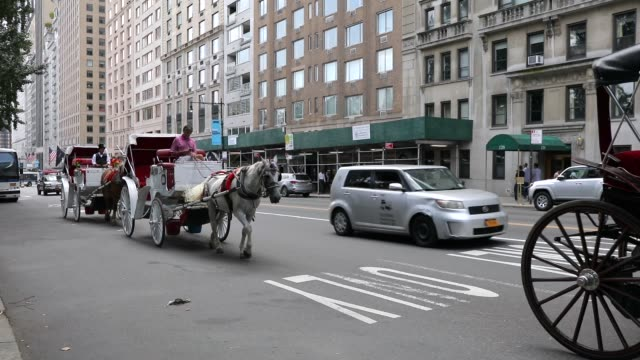 carriage horse and driver return to the stable due to excessive heat on august 10, 2018 in new york city. according to new york city administrative... - working animal stock videos & royalty-free footage