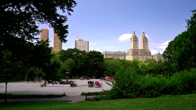 carriage horses in the central park - remo stock videos and b-roll footage