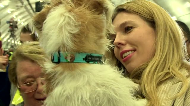 carrie symonds and dog dilyn at the general election vote count in uxbridge to support boyfriend boris johnson - domestic animals stock videos & royalty-free footage