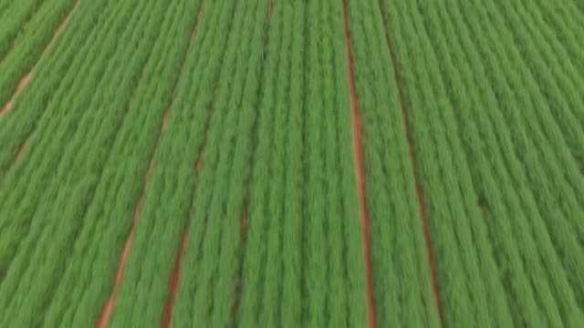 carrot field - carrot stock videos and b-roll footage