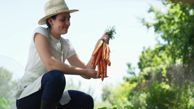 carrots, ready to be eaten - agricultural activity stock videos & royalty-free footage