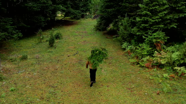 carrying a christmas tree - christmas tree stock videos & royalty-free footage