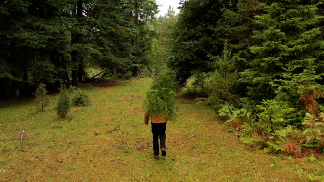 carrying a christmas tree - carrying stock videos & royalty-free footage