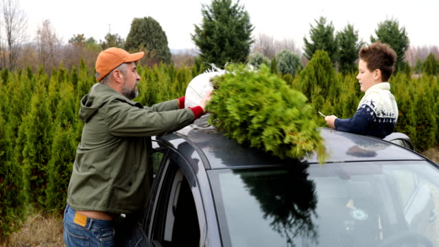 carrying christmass tree to the home - christmas tree stock videos & royalty-free footage