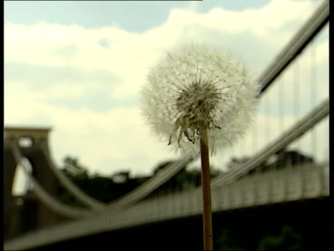 cars away over bridge money placed in collector gvs people & cars over bridge dandelion flower with bridge in b/g int charlie bray interviewed sot -... - 整える点の映像素材/bロール