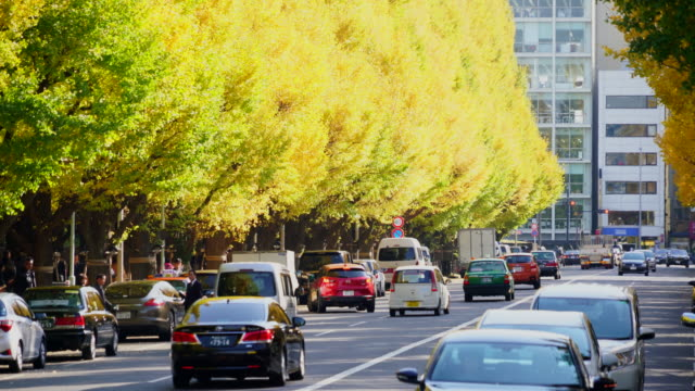 cars cross in front of autumn leaves ginkgo tree avenue and go through the avenue, and people cross the street at jingu gaien, chhiyoda ward, tokyo japan on november 17 2017. rows of glowing autumn leaves ginkgo trees surround the avenue and people. - alberato video stock e b–roll