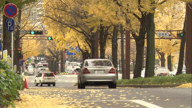 cars drive on a street lined with ginkgo trees. - 道路標識点の映像素材/bロール
