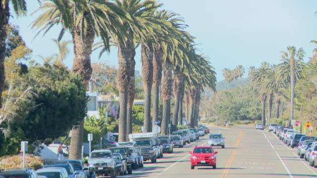 Cars drive on street with palm trees