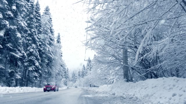 cars drive through forest in snowstorm - thick stock videos & royalty-free footage