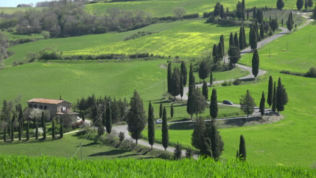Cars driving on cypress tree lined winding road in tuscany hills