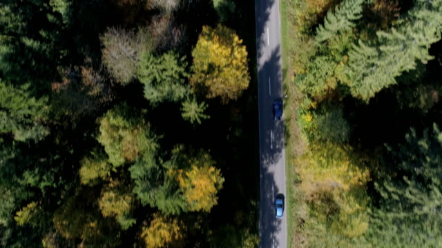 cars driving on forest road in autumn - two objects stock videos & royalty-free footage