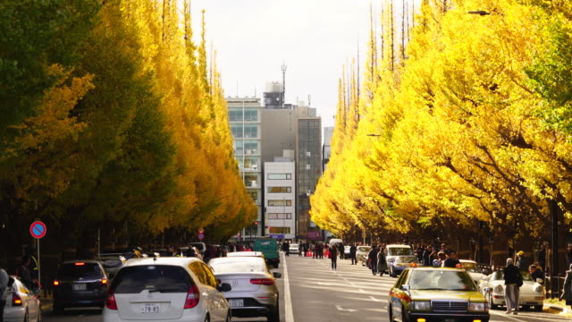 cars go through among the autumn leaves ginkgo tree avenue and people cross the street at jingu gaien, chhiyoda ward, tokyo japan on november 19 2017. rows of glowing autumn leaves ginkgo trees surround the avenue and traffics. - alberato video stock e b–roll
