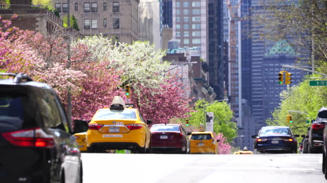 cars go through beside the rows of cherry blossoms trees at park avenue uptown manhattan new york usa on apr. 29 2018. - midtown manhattan stock videos & royalty-free footage