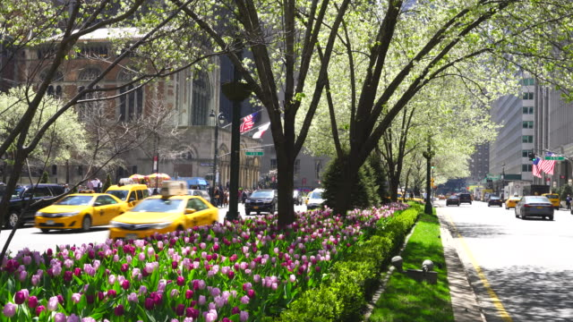 Cars go through both side of blooming tulips and street trees in median at Park Avenue at Midtown Manhattan New York NY USA on Apr 23 2018.