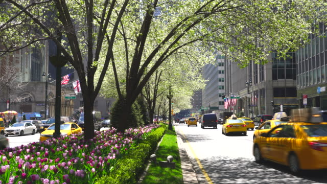 cars go through both side of blooming tulips and street trees in median at park avenue at midtown manhattan new york ny usa on apr 23 2018. - gärtnerisch gestaltet stock-videos und b-roll-filmmaterial