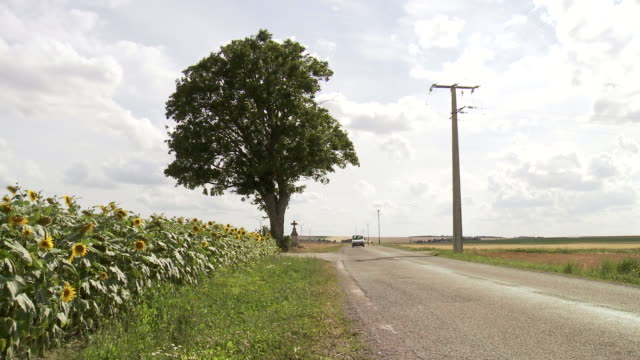 ms cars moving along single tree with roadside cross and sunflower field next to country road in rural area / beaune, burgundy, france - 道ばた点の映像素材/bロール