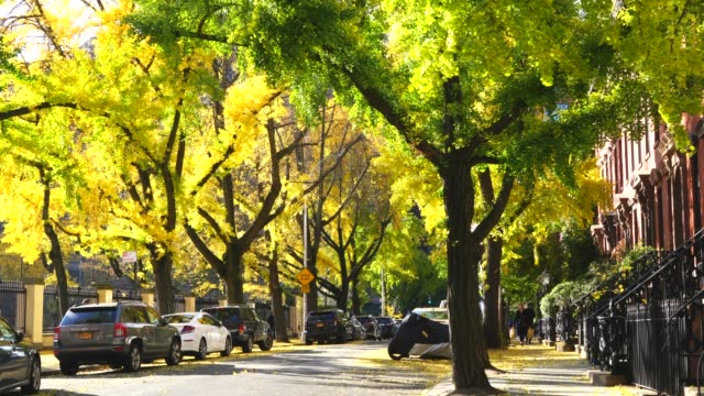 cars park under the rows of autumn color gingko trees, which along the both side of street beside residential buildings at west village new york ny usa on nov. 10 2018. - treelined stock videos & royalty-free footage