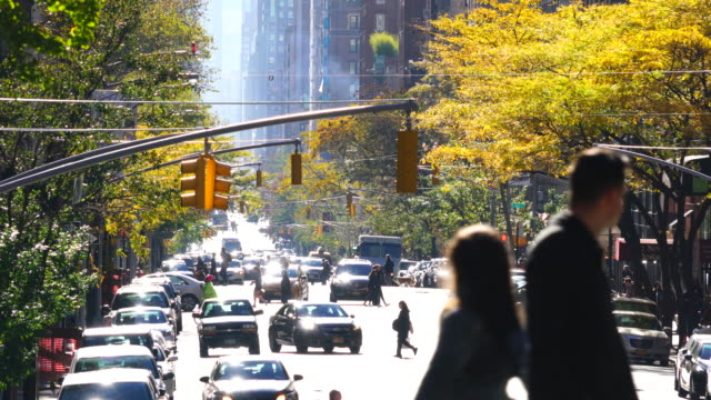 cars run on madison avenue and people cross, which is illuminated by autumn sunlight at upper east manhattan new york. - boulevard video stock e b–roll
