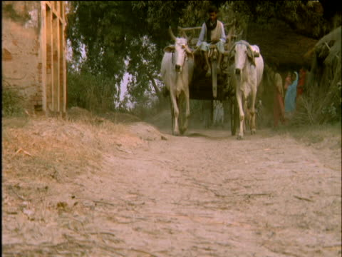 carter drives wagon pulled by pair of white bullocks down dusty road bengal - 牛車点の映像素材/bロール