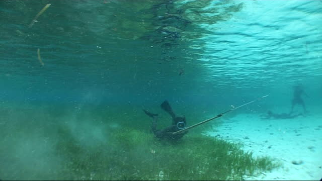 diving, fishing and sailing; more of diver with harpoon in shallow water along seabed that is covered in green plant life / other islanders walking... - seicht stock-videos und b-roll-filmmaterial