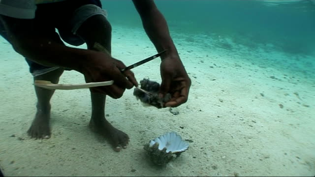 diving fishing and sailing papua new guinea carteret islands ext underwater diver standing on seabed in shallow water and removes centre from large... - schnorchel stock-videos und b-roll-filmmaterial
